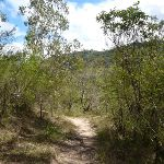 Six Foot Track east of the Coxs River (413489)