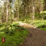 6FT on the east side of Jenolan Caves Rd (417239)