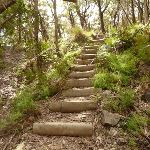 Timber steps on west side of Jenolan Caves Rd (417551)