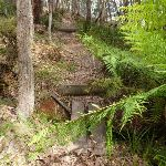 Crossing a gully on west side of Jenolan Caves Rd (417659)
