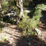 Top most hairpin bend in the Berowra Track (419107)