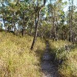 Flat section on the Mt Kuring-gai Track (422155)