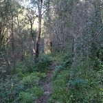 Track above the Grose River (50504)