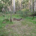 One of many campsites on the Grose River (50522)