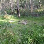 One of many clearings along the Grose River Track (52304)