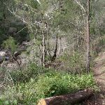 Track along the Grose River (52355)