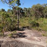 Rocky Outcrop on track east of Kariong Brook (53201)