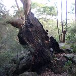 Large tree next to track (54665)