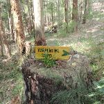 Old road signs in Watagan State Forest (59555)