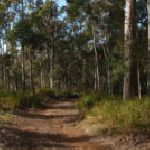 GNW near Mcleans Lookout (60995)