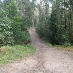 winding through the Lane Cove Valley (64148)