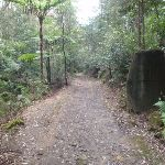 Great north walk in Northern end of Lane Cove Valley (64232)