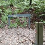 int of the great north walk and comenara track (64298)