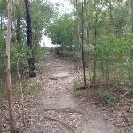 path up to thornliegh oval (64337)