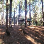 Pines picnic area in the Watagans (65021)