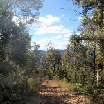 view from path up Mt Warramalong (65483)