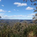 Looking through the trees east of Mt Warrawolong (65486)