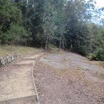 Track towards Boarding House Dam near Watagans Forest Rd in the Watagans (65552)