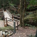 Timber bridge near the creek and moss wall in the Watagans (65883)
