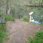 Fairylands and Lane Cove River (67329)