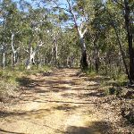 Servicetrail up to Tunks Ridge Reserve (6847)