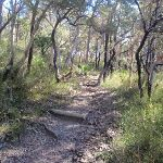 typical bushland found in the area (72802)