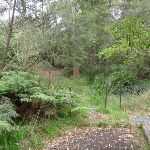 Track down from Blaxland Library (73755)