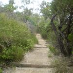Well-drained and maintained this track is a perfect access trail to the picnic area (7538)