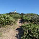 path up to the cape bailey lighthouse (75462)