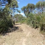 Track up to Pennant Hills Park (79474)