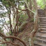 Manly Scenic Walkway (82417)