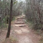 Manly Scenic Walkway (82516)