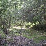 The dry river bed of the Jenolan River (8780)