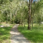 The footpath going into the campsite (8804)