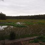 view of the lagoon from henry lawson drive (90165)