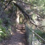 The Prince Henry Cliff Track (9047)