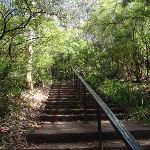 Stairs along Round walk track (92089)