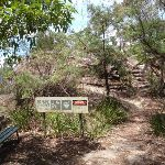 The track to Burrabarroo Lookout (92860)