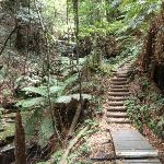 Stairs down from Fern Bower (93307)