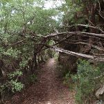 Copelands Lookout track (93400)