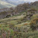 Snowy River country (96700)